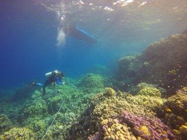 Benthic survey