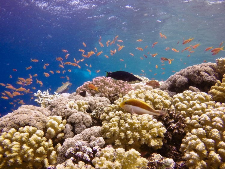Busy Red Sea